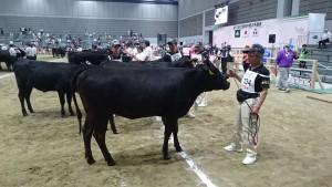 全国和牛能力共進会第4区系統雌牛群の部で、見事優勝01