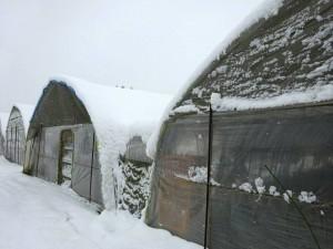 降雪の状況を確認3 大分県議会議員 土居昌弘